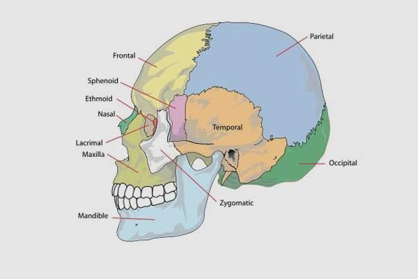 headache location chart
